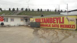 sultanbeyli adaklık kurbanlık satış ve kesim merkezi